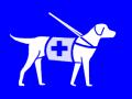 assistance dog_10a